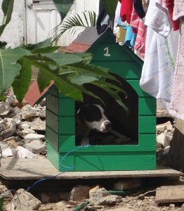 The first dog house delivered and a very satisfied tenant