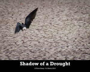 Shadow-of-a-Drought